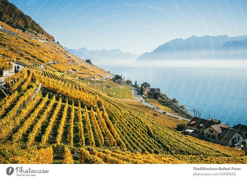 Reben Umwelt Natur Landschaft blau braun gelb gold weiß Wein Wasser Berge u. Gebirge See Genfer See Nebel Sonnenstrahlen Herbst Weltkulturerbe Schleier Haus
