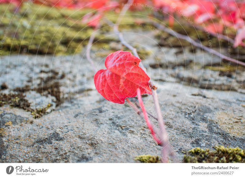 Rotes Blatt Natur Pflanze rot herzförmig Wachstum Herbst Stein Farbfoto Außenaufnahme Detailaufnahme Makroaufnahme Menschenleer Textfreiraum links