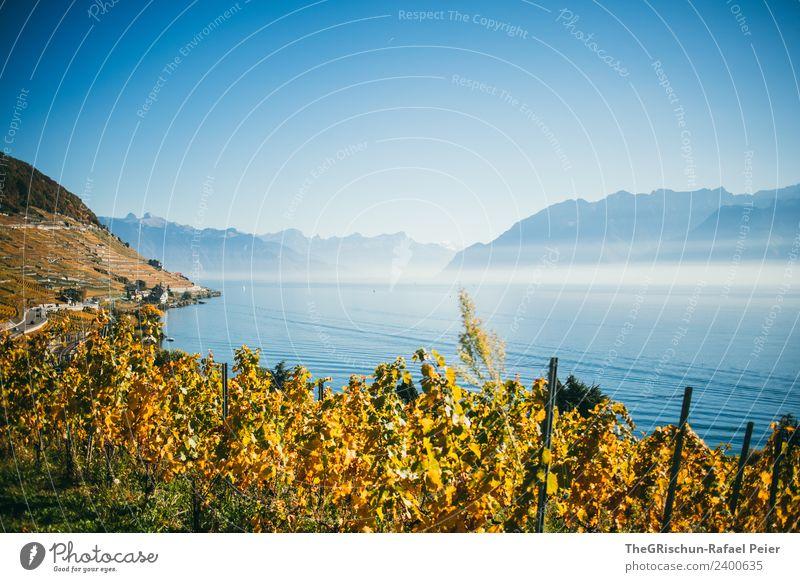 Reben Umwelt Natur Landschaft blau braun gelb gold Berge u. Gebirge Wasser Genfer See Wein Weltkulturerbe Schweiz Pflanze Weintrauben Aussicht Berghang Dunst