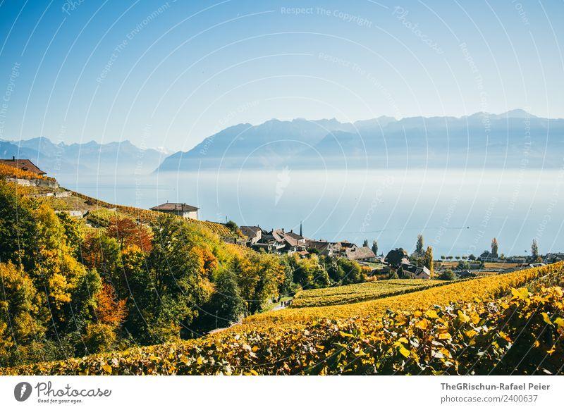 Rebberg Umwelt Natur Landschaft blau mehrfarbig gelb gold grün Weinberg Schweiz Herbst Genfer See Berge u. Gebirge Dunst Nebel Pflanze Weintrauben Farbfoto