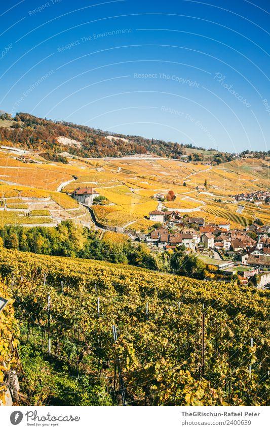 Rebberg Umwelt Natur Landschaft blau mehrfarbig gelb gold Wein niedlich Herbst Himmel Blauer Himmel wandern Schweiz Weltkulturerbe Farbfoto Außenaufnahme