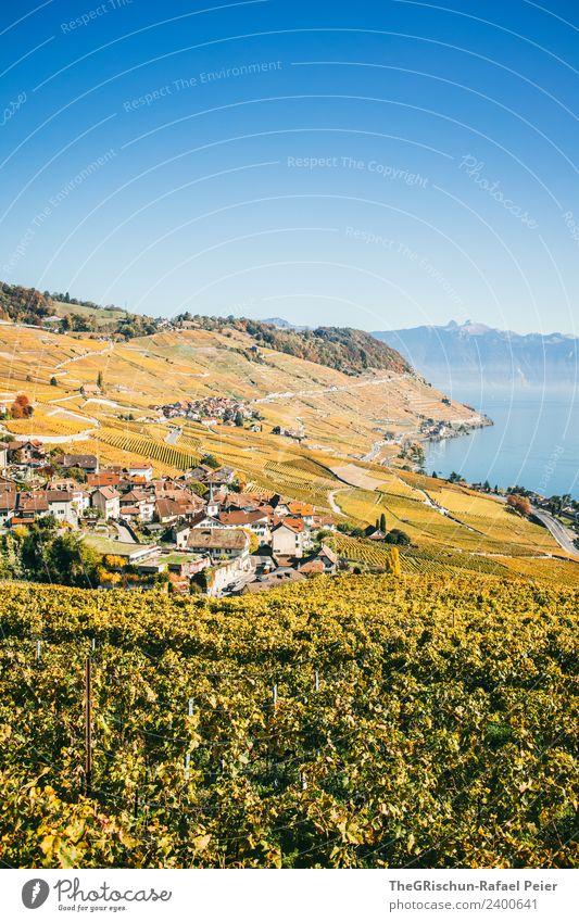 Rebberge Umwelt Natur Landschaft blau gelb gold grün Herbst Genfer See Weintrauben Weinberg niedlich Haus Wege & Pfade Berghang Schweiz Weltkulturerbe Tourismus