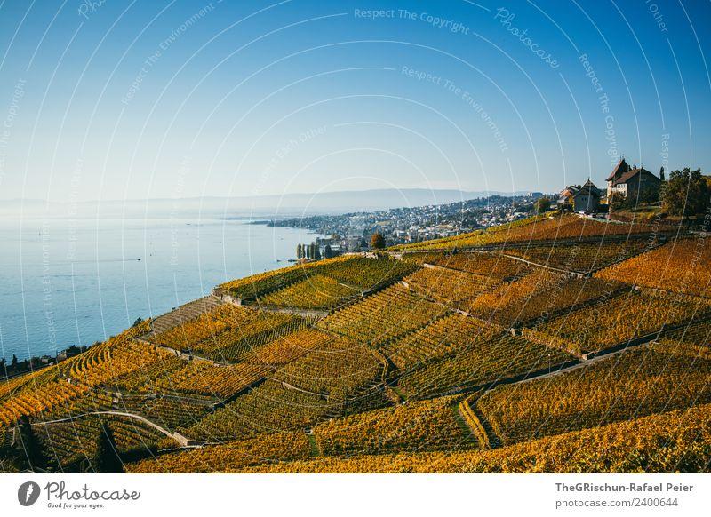 Weinberg Umwelt Natur Landschaft blau braun gelb gold grün Feld Straße mehrfarbig Wege & Pfade Baum Weintrauben Herbst Schweiz Genfer See Aussicht Haus Hügel