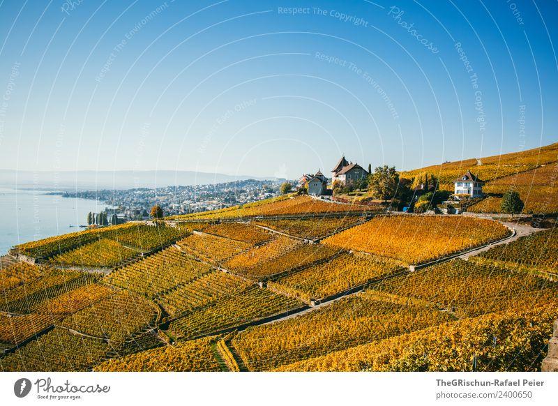 Schweizer_Rebbergen Umwelt Natur Landschaft blau braun gelb gold grün orange Weinberg Weltkulturerbe Tourismus Genfer See Herbst niedlich Wärme Aussicht