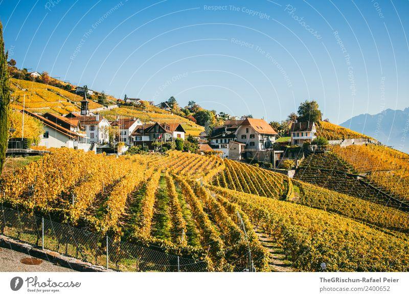 Weinberge Umwelt Natur Landschaft Pflanze Baum blau braun gelb gold grün orange Haus Dorf Weinlese Weintrauben Herbst Himmel Farbfoto Außenaufnahme Menschenleer