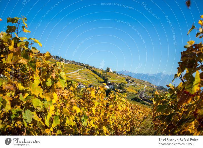 Rebberg Natur Landschaft blau braun gelb gold grün orange Herbst Schweiz Wein Weinberg Weintrauben Haus Himmel Farbfoto Außenaufnahme Textfreiraum oben Tag