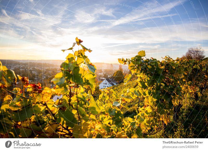 Winterthur Umwelt Natur Landschaft gelb gold grün Himmel Stimmung Sonnenuntergang Wein Stadt Herbst Wärme Farbfoto Außenaufnahme Menschenleer Textfreiraum oben
