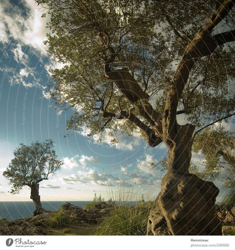 Eden. Himmel Natur blau alt Wasser grün Ferien & Urlaub & Reisen Baum Sommer Meer Wolken Erholung Gras Holz Küste braun