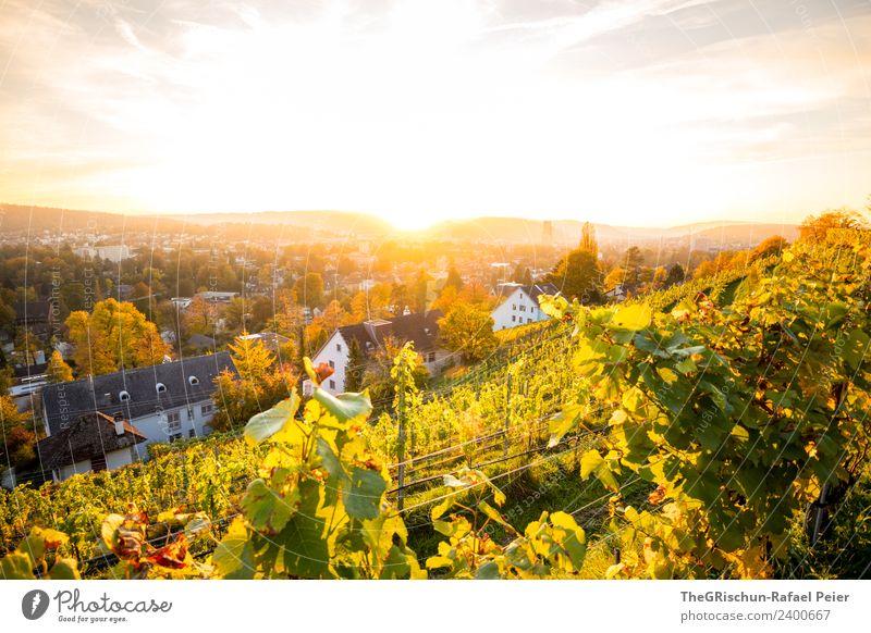 Sonnenuntergang Umwelt Natur Himmel blau gelb gold grün Wein Winterthur Stadt Haus Gegenlicht Stimmung Farbfoto Außenaufnahme Menschenleer Textfreiraum oben Tag