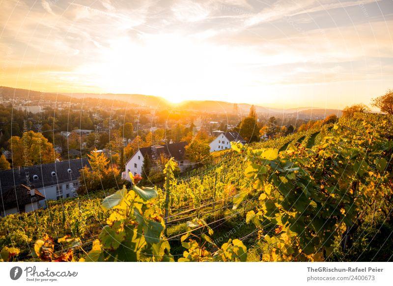 Winterthur Himmel gelb gold grün Schweiz Stimmung Herbst niedlich Sonne Gegenlicht Sonnenuntergang Wein Weinberg Farbfoto Außenaufnahme Textfreiraum oben Abend