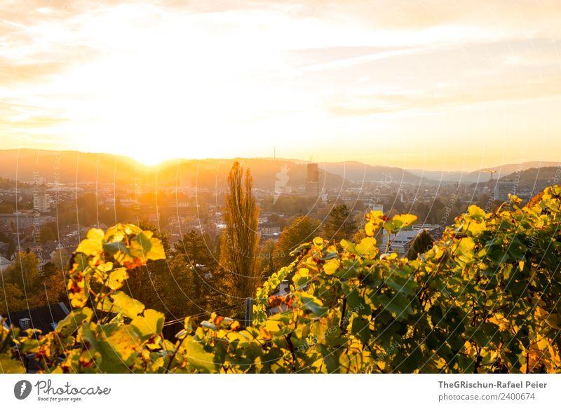 Sonnenungergang Umwelt Natur braun gelb gold grün orange Wein Baum Stimmung Stadt Sonnenuntergang Winterthur Farbfoto Außenaufnahme Textfreiraum oben Abend