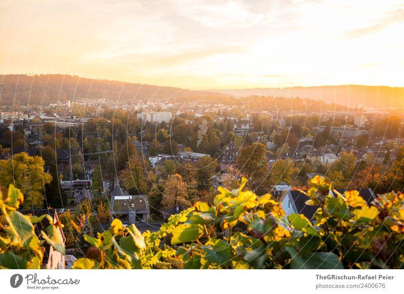 Winterthur Umwelt Natur Landschaft mehrfarbig gelb gold grün Sonnenuntergang Stimmung Gegenlicht Herbst Blatt Pflanze Baum Stadt Wein Farbfoto Außenaufnahme