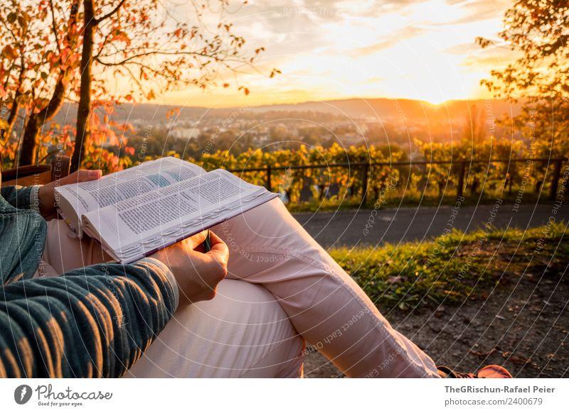 Lesen Natur mehrfarbig gelb gold lesen genießen Aussicht Winterthur Baum Gegenlicht Stimmung Sonnenuntergang Farbfoto Außenaufnahme Textfreiraum oben Abend
