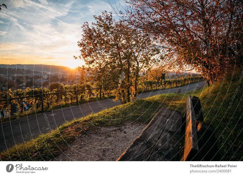Winterthur Umwelt Natur braun gelb gold grün Herbst Bank sitzen Aussicht Sonnenuntergang Stimmung Wege & Pfade Farbfoto Außenaufnahme Menschenleer