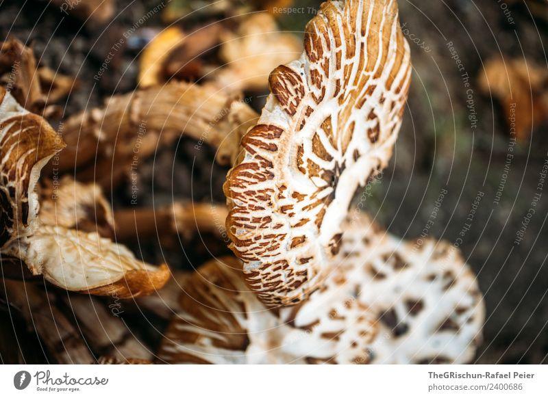 Pilz Natur braun Strukturen & Formen Muster Wachstum Essen Farbfoto Außenaufnahme Nahaufnahme Detailaufnahme Makroaufnahme Menschenleer Textfreiraum rechts Tag