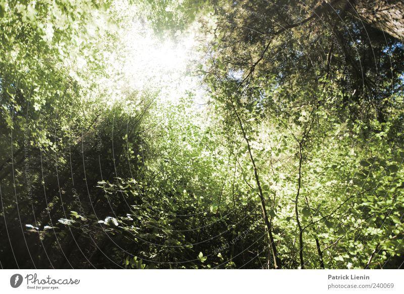 Lichtblick Sonne Umwelt Natur Pflanze Sonnenlicht Sommer Wetter Schönes Wetter Baum Wald hell natürlich grün blenden grell Farbfoto Außenaufnahme Menschenleer