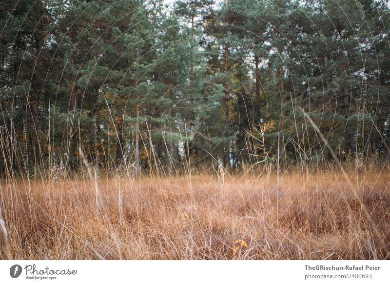 Natur grün Landschaft Baum Wald Umwelt Wiese Gras braun trocken Halm