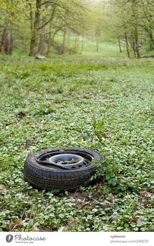 Vergessen Umwelt Natur Landschaft Gras Wiese Wald ästhetisch Vergänglichkeit Zeit Zerstörung Autoreifen Müll Müllentsorgung dreckig vergessen kaputt