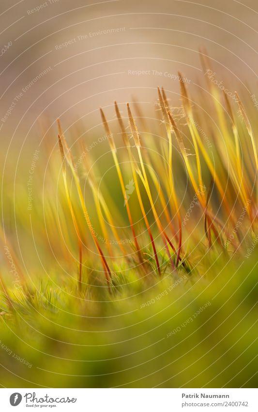 Moos Umwelt Natur Frühling Sommer Herbst Klima Klimawandel Grünpflanze Duft entdecken Erholung streichen Wachstum exotisch Gesundheit Unendlichkeit kuschlig