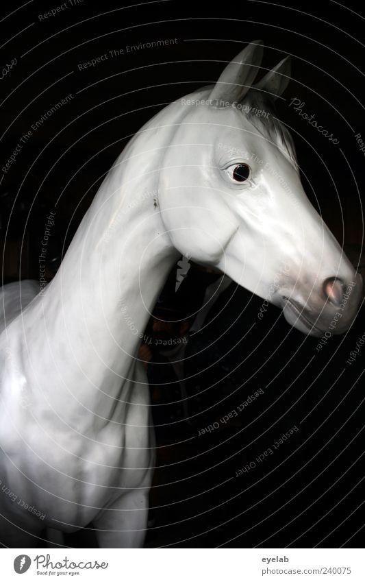 Wendy Model schön Tier Auge grau Kopf elegant ästhetisch niedlich Pferd Kunststoff dünn Statue trashig Figur Hals falsch
