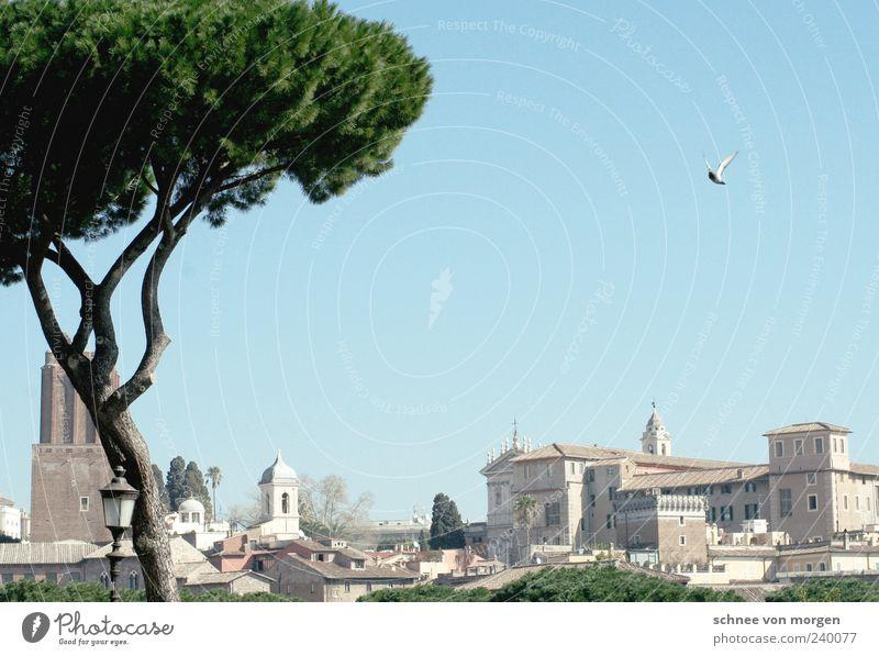 kurzer flügelschlag Rom Italien Himmel blau Taube Baum antik historisch grün Gebäude Städtereise Kirche Menschenleer Reisefotografie