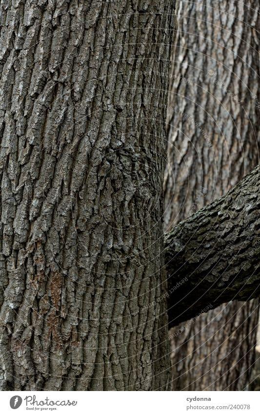 Naturstruktur Umwelt Baum ästhetisch einzigartig Leben nachhaltig Schutz Wachstum Baumstamm Baumrinde Strukturen & Formen Holz braun ökologisch Farbfoto