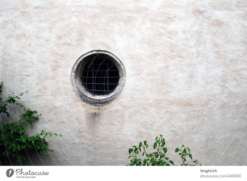 Gitterauge grün Fenster Wand grau Mauer geschlossen außergewöhnlich Sträucher rund Loch