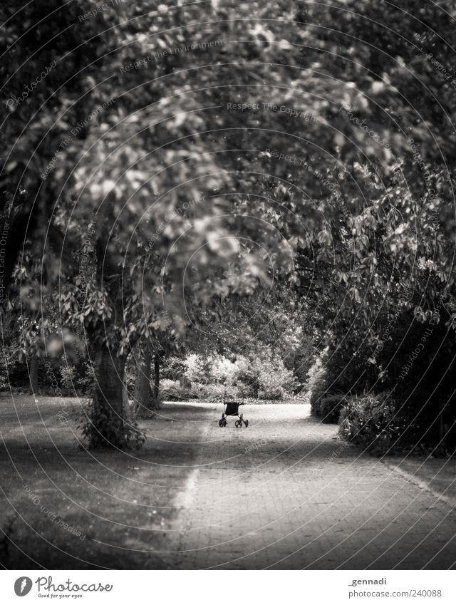 Ruhestand Umwelt Natur Landschaft Pflanze Baum Gras Gefühle Stimmung authentisch Gehhilfe Blatt Wege & Pfade Park Vignettierung Schwarzweißfoto Außenaufnahme