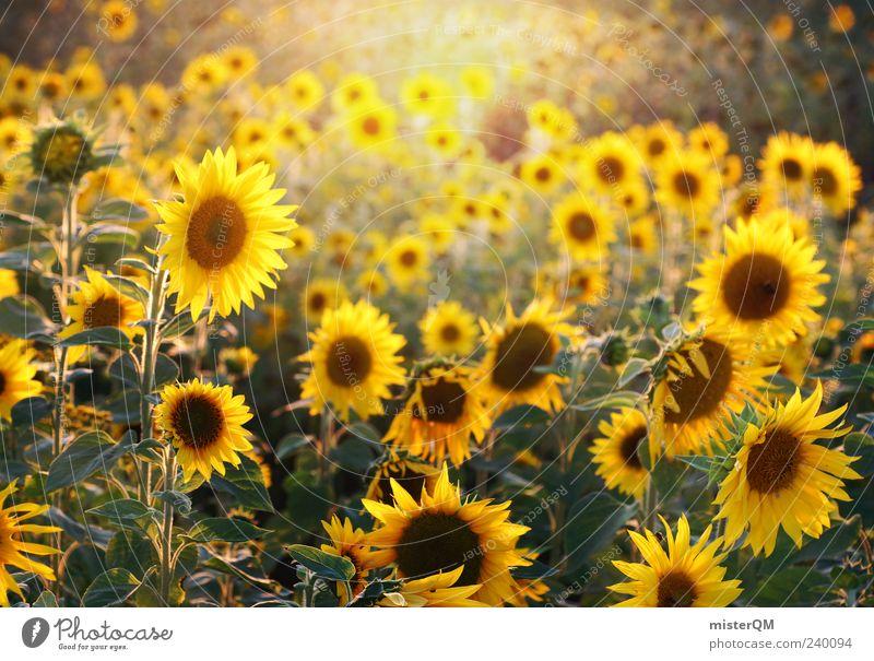 Sunflowers. ästhetisch Sonnenlicht natürlich Natur Sonnenblume Sonnenblumenfeld Sommer Blühend gelb viele Farbfoto Außenaufnahme Detailaufnahme abstrakt Muster