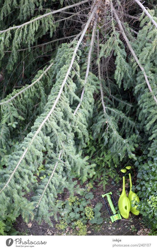 die drei von der Tannstelle alt grün Baum Sommer Umwelt dunkel Garten Park Stimmung natürlich groß Wachstum Perspektive lang Landwirtschaft unten