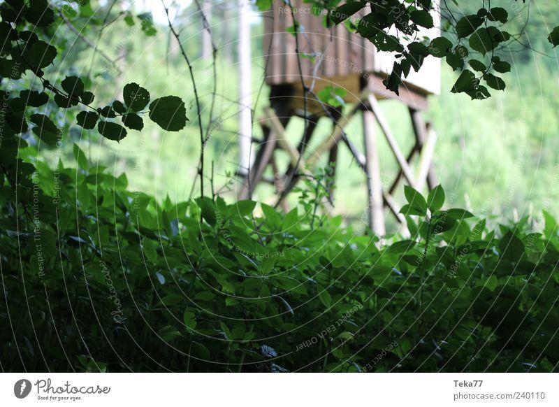 Auf der Pirsch Natur grün Blatt Einsamkeit schwarz Wald Umwelt Landschaft Wiese Stil braun Feld ästhetisch geheimnisvoll Frieden verstecken