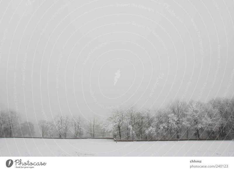 Frostig Baum Pflanze Winter Einsamkeit Umwelt Landschaft Wiese kalt Schnee Wand grau Mauer Traurigkeit Park Eis Nebel