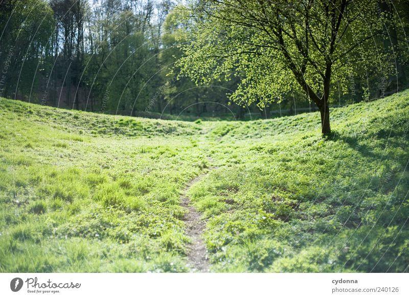 Schleichweg Natur grün Baum Einsamkeit ruhig Erholung Wald Ferne Umwelt Landschaft Wiese Leben Gras Frühling Wege & Pfade Freiheit