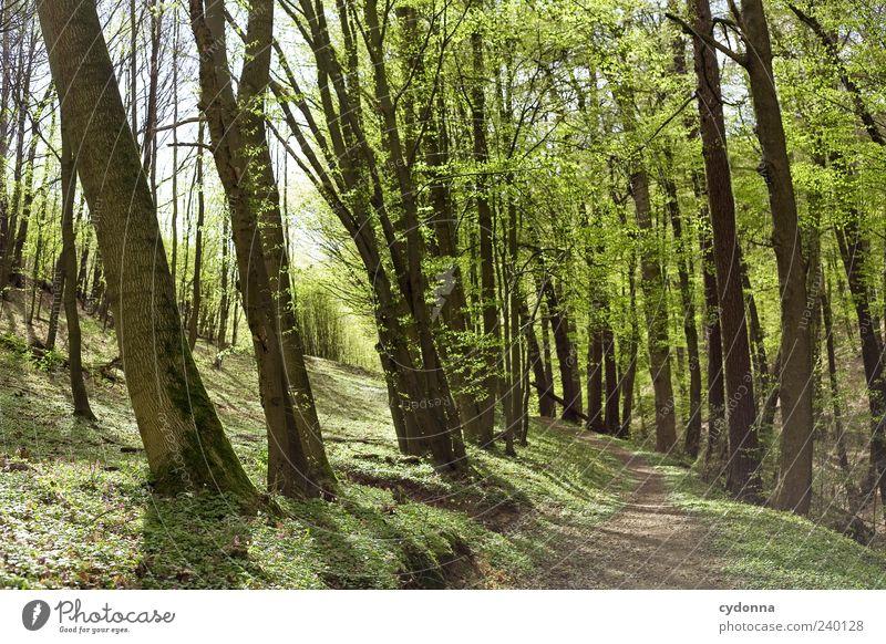 Waldspaziergang Natur Baum Einsamkeit ruhig Erholung Ferne Umwelt Landschaft Leben Frühling Wege & Pfade Freiheit träumen Freizeit & Hobby Ausflug