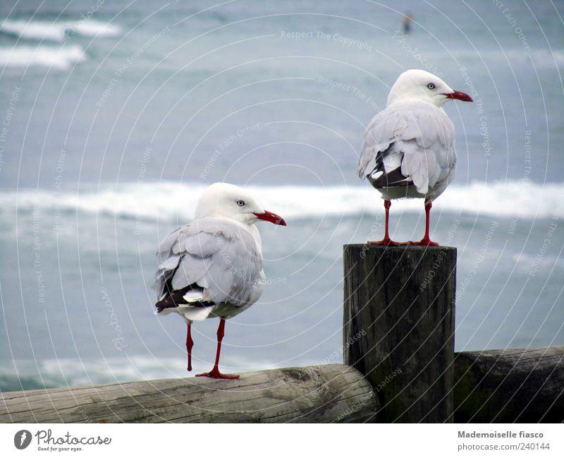 Vier Beine, drei Füsschen Natur blau weiß Meer Tier Küste grau Freundschaft braun Vogel Zusammensein Wellen Zufriedenheit stehen niedlich Zusammenhalt