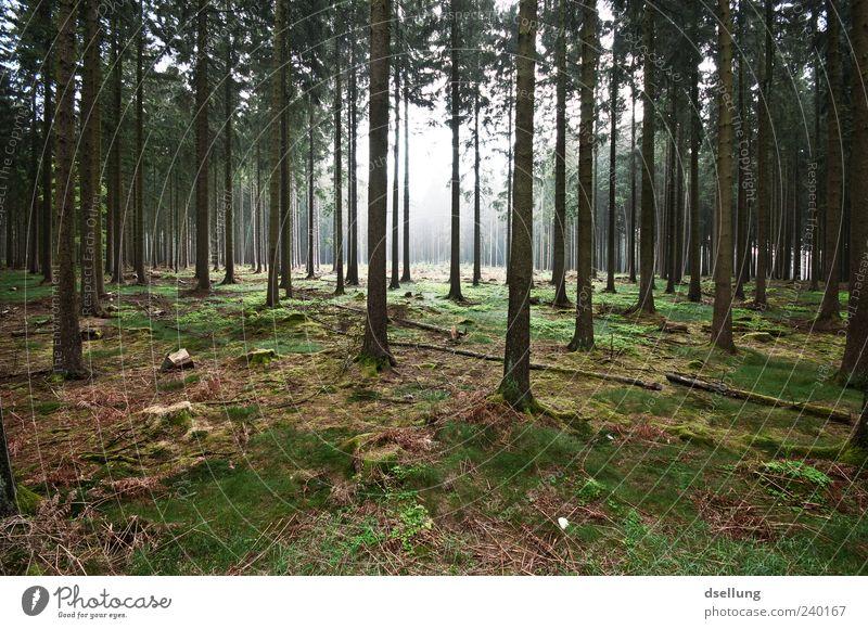 Lichtung Umwelt Natur Landschaft Pflanze Frühling Baum Gras Wildpflanze Wald dunkel groß natürlich braun grau grün Farbfoto Außenaufnahme Menschenleer Tag