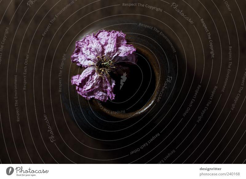 Schönheit ist Werden alt schön Pflanze Blume dunkel Traurigkeit ästhetisch Trauer Ende trocken Blühend welk Vase verblüht dehydrieren Kontrast