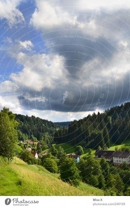 Schwarz im Schwarzwald Natur Ferien & Urlaub & Reisen Baum Pflanze Sommer Wald Ferne Umwelt Landschaft Wiese Berge u. Gebirge Gras Regen Wetter Klima Ausflug