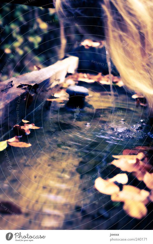 Abkühlen Mensch Wasser grün Sommer gelb Herbst Haare & Frisuren blond Freizeit & Hobby trinken Brunnen genießen Flüssigkeit Wasserstelle natürliche Farbe