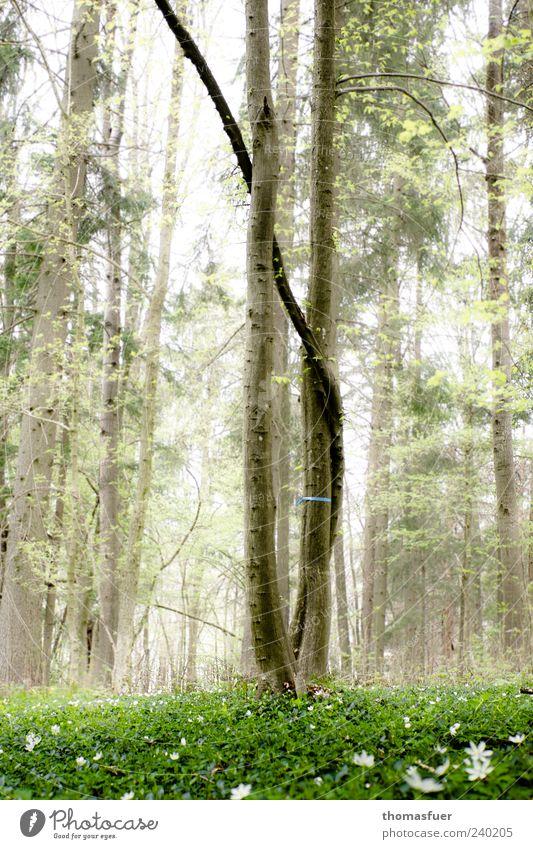 Familienbaum im Friedwald Natur Landschaft Himmel Frühling Nebel Baum Gras Wildpflanze Wiese Wald natürlich Stimmung Verschwiegenheit trösten ruhig Hoffnung