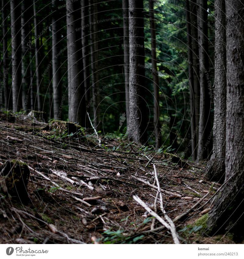 Beieinander stehen Umwelt Natur Landschaft Pflanze Erde Sommer Baum Wildpflanze Baumstamm Unterholz Ast Zweig Baumstumpf Wald dunkel natürlich grün Idylle ruhig