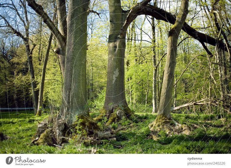 Baumgruppe Natur ruhig Erholung Wald Umwelt Landschaft Frühling 3 Ausflug Wachstum einzigartig Baumstamm harmonisch Perspektive Waldrand