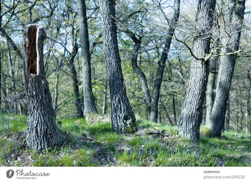 Baumstumpf Natur ruhig Wald Umwelt Landschaft Gras Freiheit außergewöhnlich Ausflug Wachstum ästhetisch einzigartig Baumstamm hohl Ferien & Urlaub & Reisen