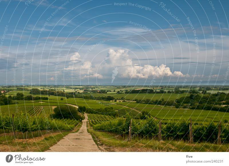 zum wohl die pfalz Natur Landschaft Himmel Wolken Horizont Sonnenlicht Sommer Schönes Wetter Pflanze Baum Gras Wein Wiese Hügel Wege & Pfade Farbfoto