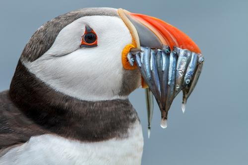 Natur Ferien & Urlaub & Reisen Wasser Tier Strand Umwelt Küste Vogel Wildtier Europa Abenteuer Europäer Umweltschutz England Großbritannien Tierliebe
