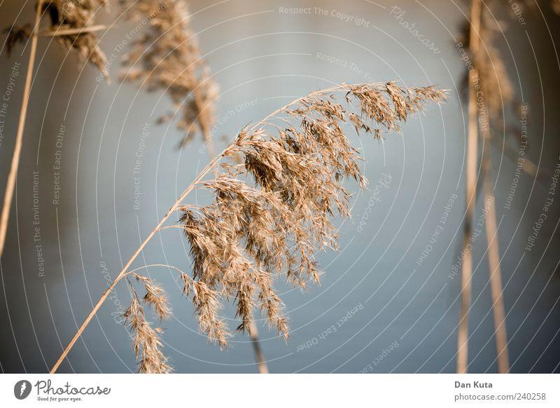Abgegrast Natur Sommer ruhig Gras braun verblüht Gräserblüte