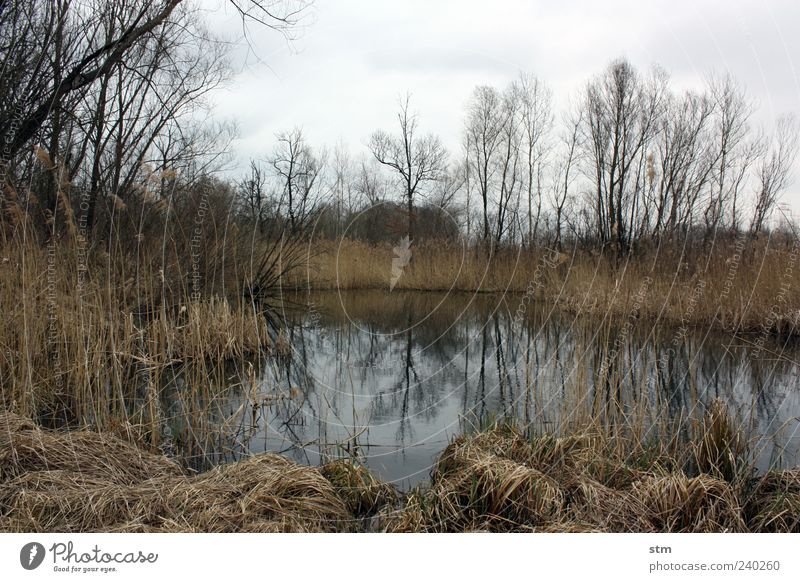 auenland Himmel Natur Wasser Baum Pflanze Wolken Wald Umwelt Landschaft Herbst Gras See Wetter Sträucher Teich Sumpf