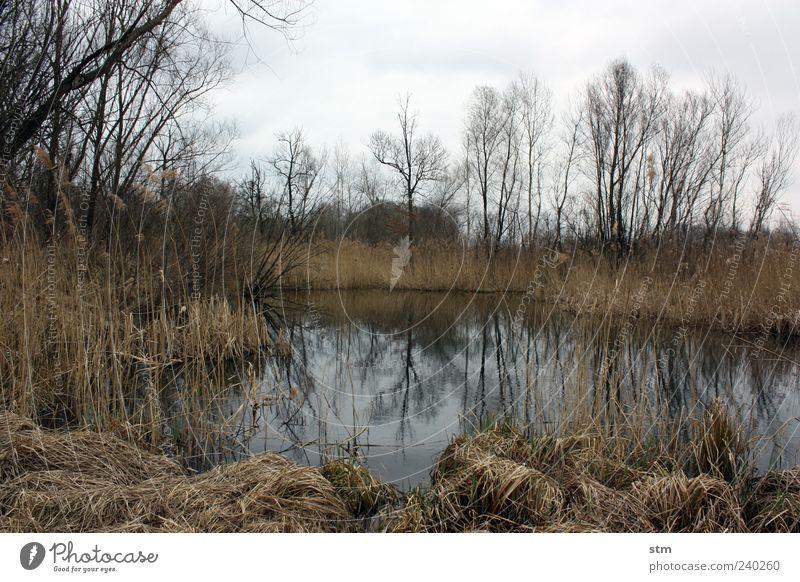 auenland Umwelt Natur Landschaft Pflanze Wasser Himmel Wolken Herbst Wetter Baum Gras Sträucher Wildpflanze Wald Moor Sumpf Teich See Außenaufnahme Menschenleer