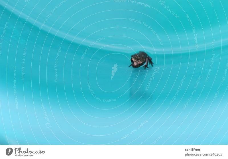 Spiegelbild Tier Frosch 1 Tierjunges Blick sitzen klein winzig Kopf türkis Menschenleer Textfreiraum links Textfreiraum rechts Textfreiraum unten