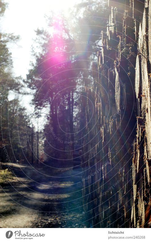 das leuchten im walde Natur Baum Sommer Wald Umwelt Landschaft Frühling Holz Wege & Pfade rosa Ausflug Schönes Wetter Fußweg Stapel Lichtspiel Forstwirtschaft